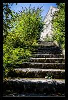 L'escalier verdoyant
